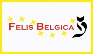 Felis Belgica, kattenshow, catshow, cat'chy images
