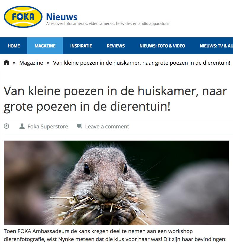 FOKA, blijdorp, dierentuin, rob doolaard, cat'chy images, dierenfotograaf rotterdam