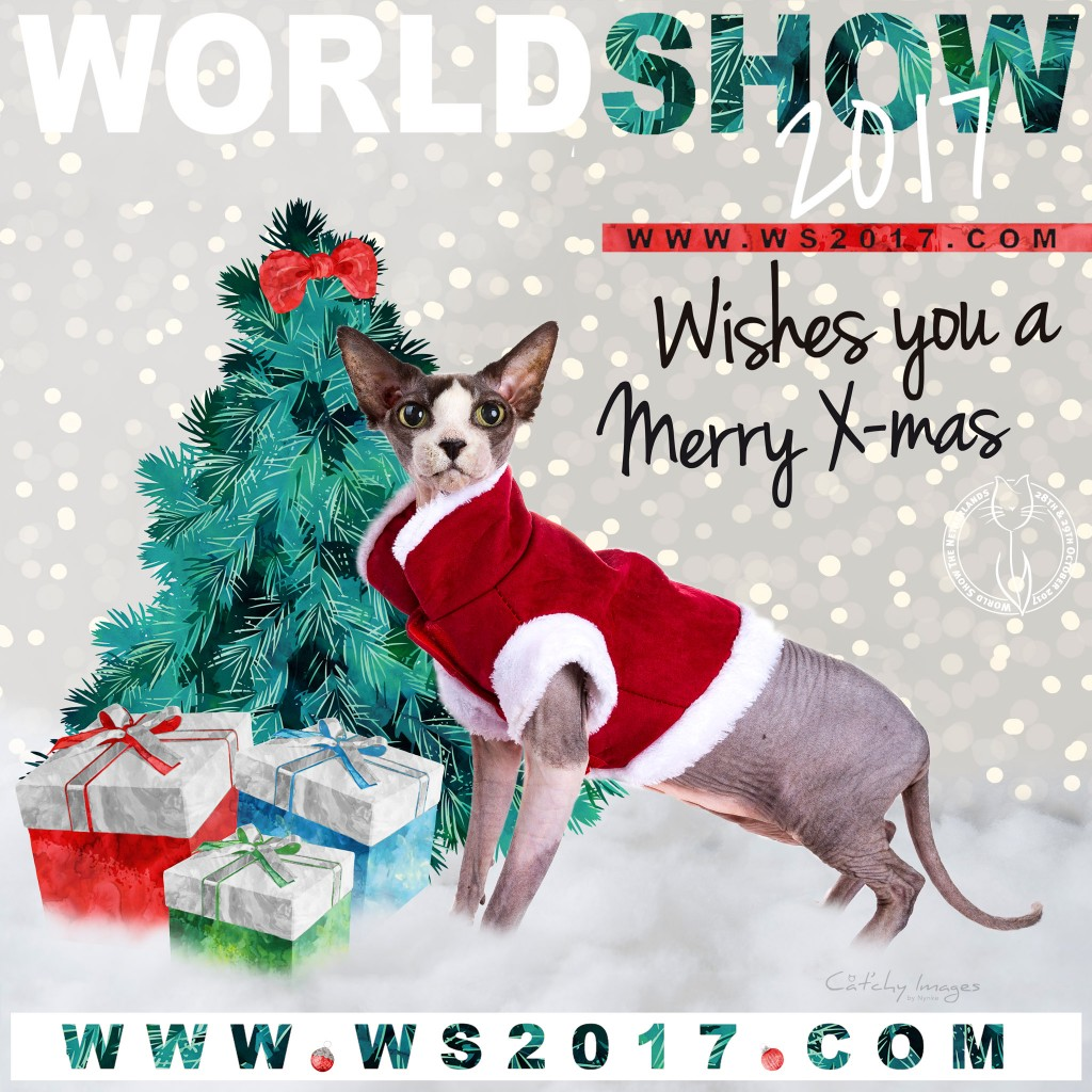 WS2017, world show 2017, cat'chy mages, kattenfotografie, showfotograaf