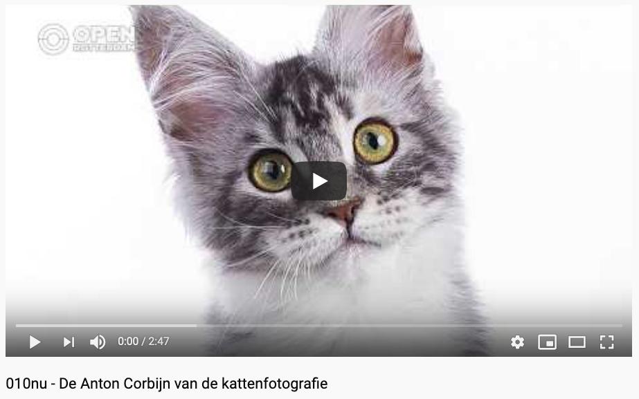 Cat'chy Images, Anton Corbijn, Corbijn, dierenfotografie, kattenfotograaf