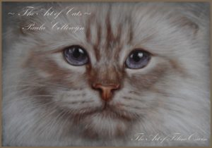 best cat photographer, cat photography, Paula Collewijn, artist, sacred birman, heilein birmaan, tekening, pastel